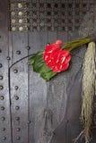 Flor de flamenco roja foto de archivo libre de regalías