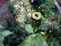 Flor de florescência Foto de Stock