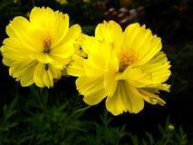 Flor de florescência fotografia de stock