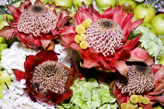Flor de florescência bonita, protea foto de stock royalty free