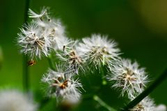 Flor de florescência branca Fotografia de Stock Royalty Free