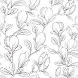 Flor de florescência da magnólia ilustração royalty free
