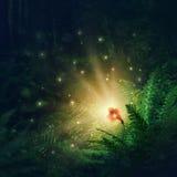 Flor de florescência da samambaia Foto de Stock Royalty Free