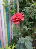 Flor de florescência do verão foto de stock