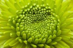 Flor de florescência macro Fotos de Stock