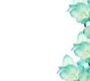 Flor de Fresia - diseño de la frontera Imagenes de archivo