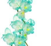 Flor de Fresia - diseño de la frontera Foto de archivo libre de regalías