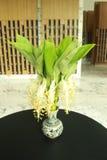 Flor de Globba Imagen de archivo