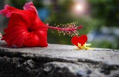 Flor de Gumamela e uma forma do coração do entalhe Fotografia de Stock Royalty Free