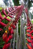 Flor de Heliconia imágenes de archivo libres de regalías