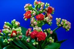Flor de interior con los brotes Fotos de archivo libres de regalías