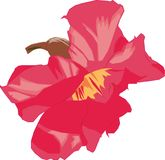 Flor de Kamboja Fotos de Stock