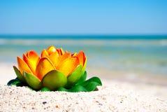 A flor de lótus alaranjada com folhas do verde encontra-se na areia em um fundo de férias de verão do mar azul e do céu azul Fotos de Stock