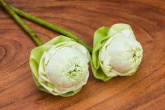 Flor de lótus brancos Foto de Stock Royalty Free