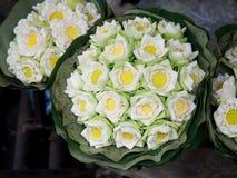 Flor de lótus brancos foto de stock