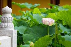 Flor de lótus da Buda imagens de stock
