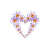 A flor de lótus ou o lírio de água roxo florescem o coração dado forma Imagem de Stock Royalty Free