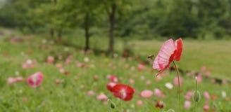 Flor de la abeja Fotos de archivo