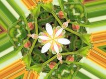 Flor de la abeja de las naturalezas Imagen de archivo libre de regalías