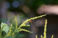 Flor de la abeja y de la hierba Fotos de archivo libres de regalías