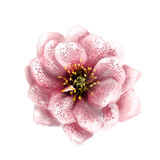 Flor de la acuarela Fotos de archivo libres de regalías