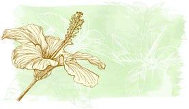 Flor de la acuarela del hibisco Fotografía de archivo