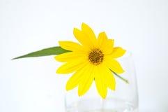 Flor de la alcachofa de Jerusalén en un florero de cristal imagen de archivo libre de regalías