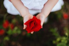 Flor de la amapola en mano del niño imagenes de archivo
