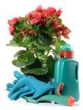 Flor de la begonia en un crisol fotos de archivo libres de regalías