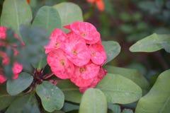 Flor de la belleza imágenes de archivo libres de regalías