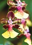 Flor de la belleza Imagen de archivo libre de regalías
