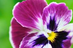 Flor de la belleza Fotografía de archivo