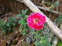 Flor de la belleza Foto de archivo libre de regalías