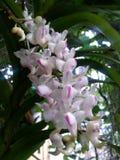 Flor de la belleza Imagen de archivo