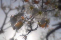 Flor de la belleza fotos de archivo