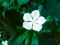 Flor de la belleza para hacer su casa hermosa imágenes de archivo libres de regalías