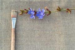 Flor de la brocha y de la achicoria en el despido Foto de archivo libre de regalías