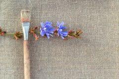 Flor de la brocha y de la achicoria en el despido Fotografía de archivo libre de regalías