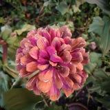 Flor de la caída imagenes de archivo