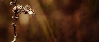 Flor de la caída Foto de archivo libre de regalías