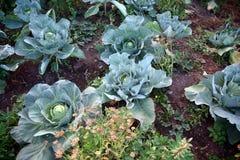 Flor de la calabaza en el jardín Foco selectivo de la imagen Fotografía de archivo libre de regalías