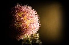 Flor de la cebolla en un vidrio Foto de archivo