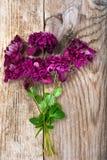 Flor de la clemátide púrpura en fondo rústico de madera Imagenes de archivo