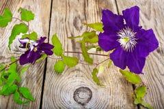 Flor de la clemátide púrpura en fondo rústico de madera Imágenes de archivo libres de regalías