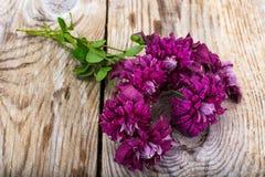 Flor de la clemátide púrpura en fondo rústico de madera Foto de archivo libre de regalías