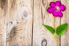 Flor de la clemátide púrpura en fondo rústico de madera Imagen de archivo