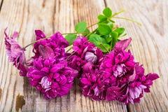 Flor de la clemátide púrpura en fondo rústico de madera Foto de archivo