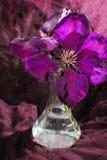 Flor de la clemátide púrpura en un fondo oscuro Imagenes de archivo