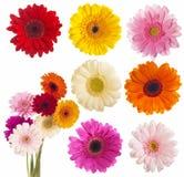 Flor de la colección de la margarita del gerber Fotos de archivo libres de regalías