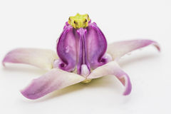 Flor de la corona Imagenes de archivo